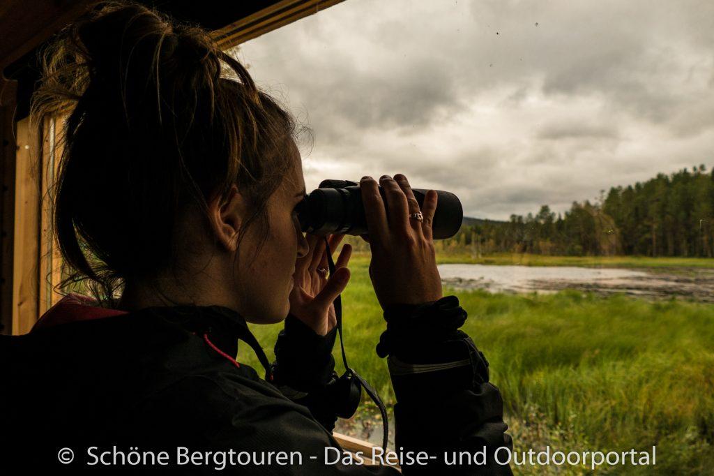 Wir halten gespannt Ausschau nach den Bären - Foto: Mario Hübner