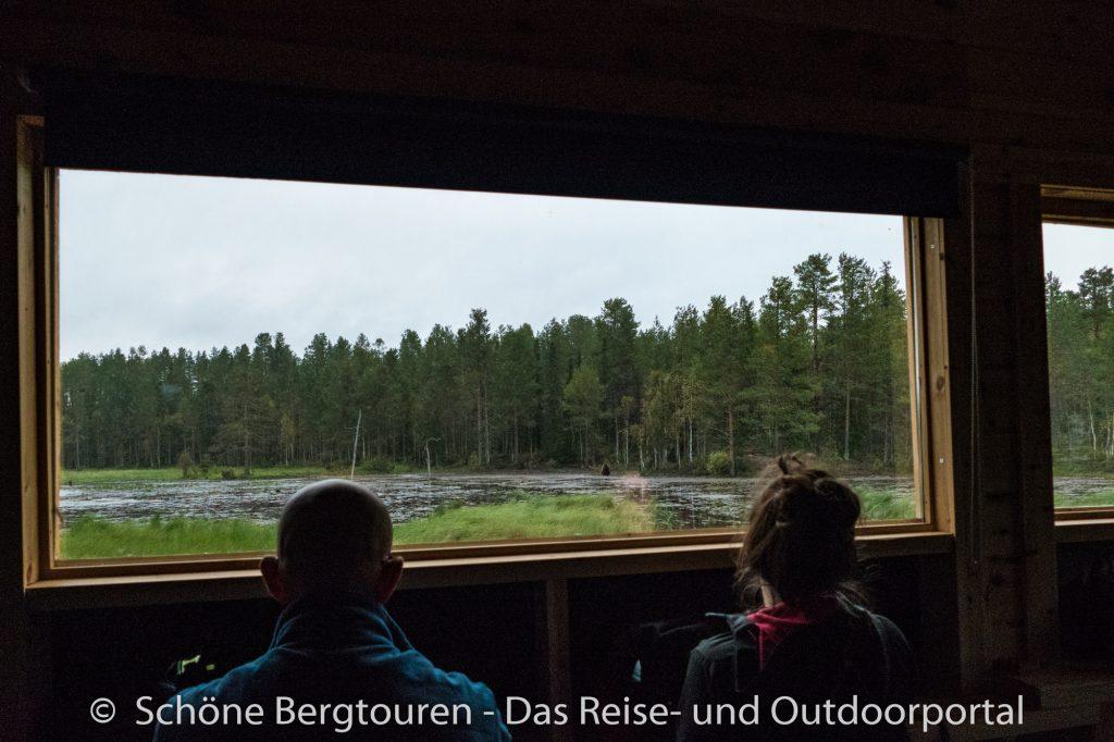 Finnland - Baerenbeobachtung