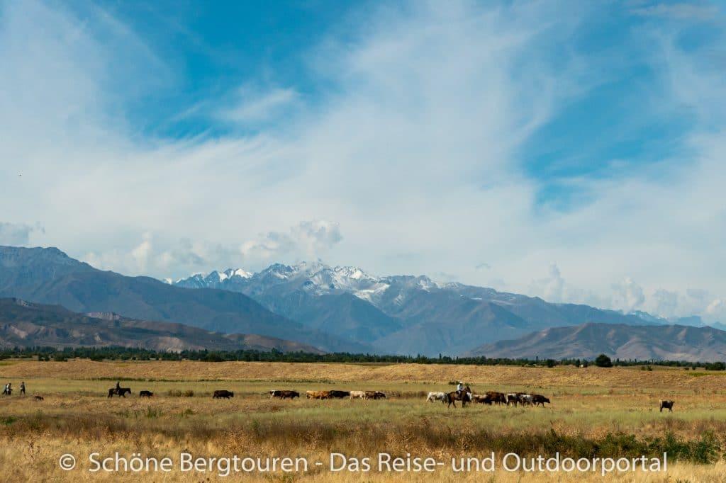 Khan Tengri Trekking - Kuhherde