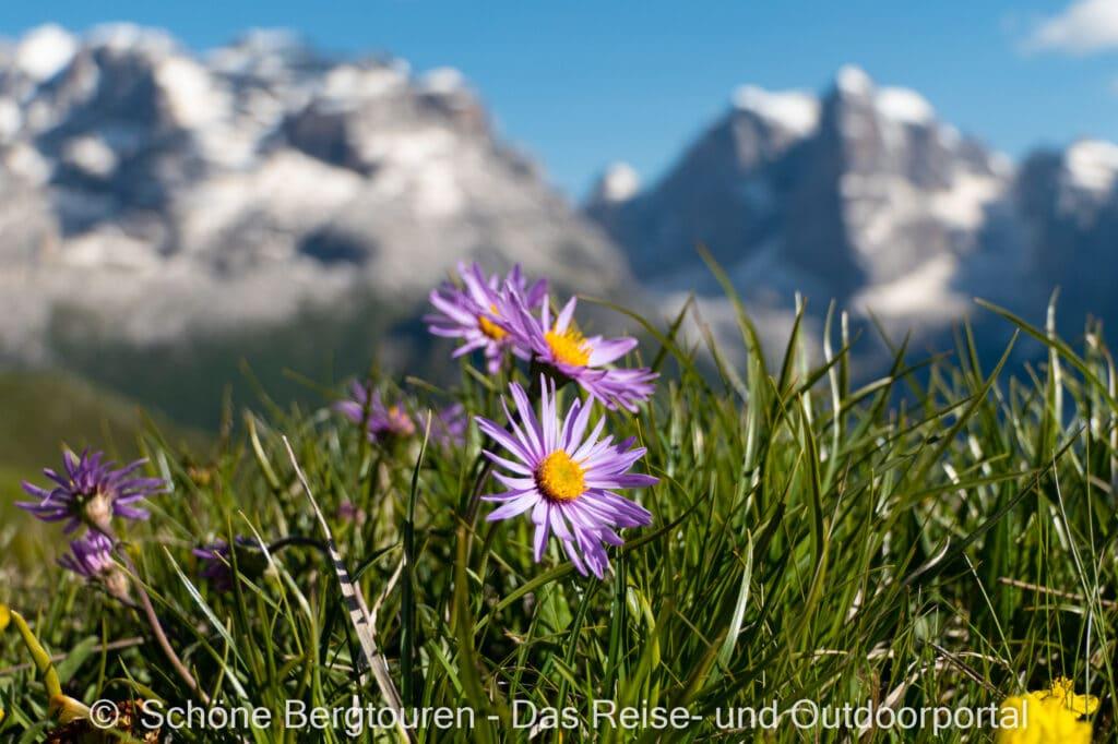 Trentino - Blumen am Monte Spinale