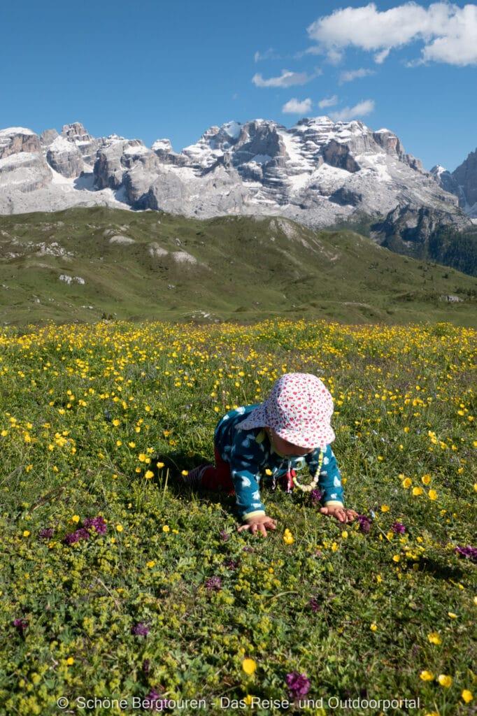 Trentino - Almwiesen am Monte Spinale